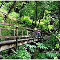 司馬庫斯巨木群步道29.JPG