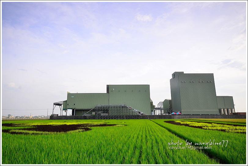 後壁無米樂社區稻田彩繪13.JPG