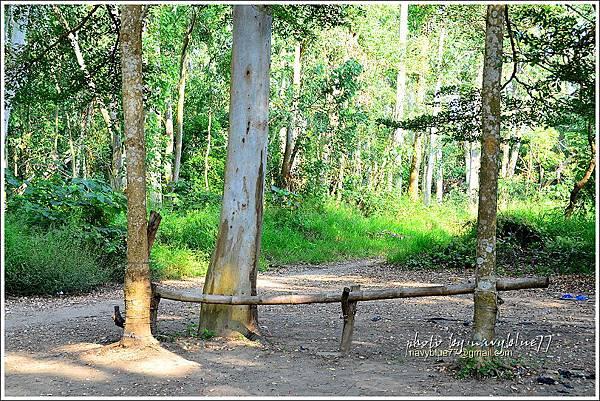 仁德虎山森林步道05.JPG