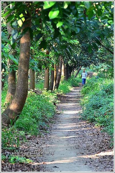 仁德虎山森林步道09.JPG