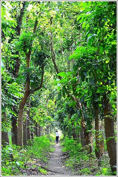 仁德虎山森林步道12.JPG