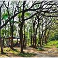 仁德虎山森林步道15.JPG