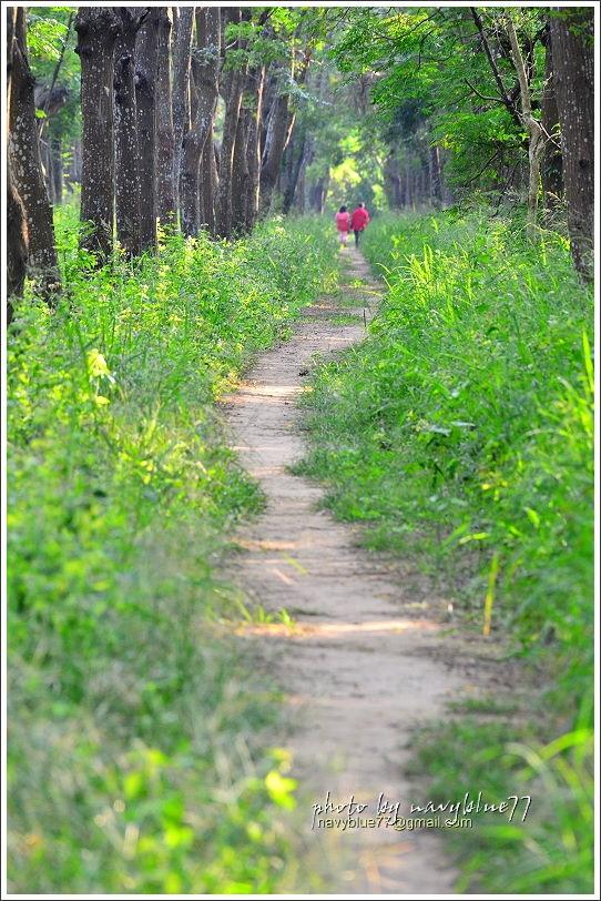 仁德虎山森林步道16.JPG