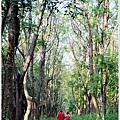 仁德虎山森林步道17.JPG