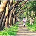 仁德虎山森林步道18.JPG