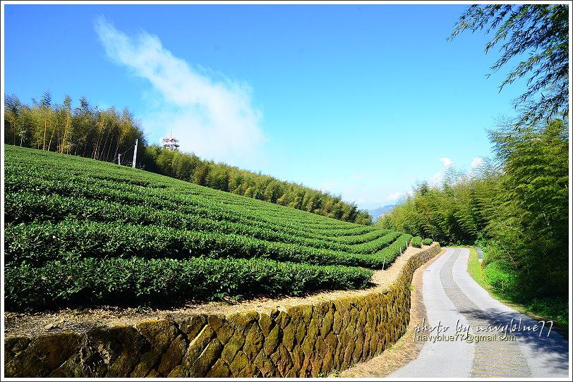 隙頂二延平步道-茶霧之道25.JPG
