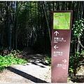 隙頂二延平步道-茶霧之道26.JPG