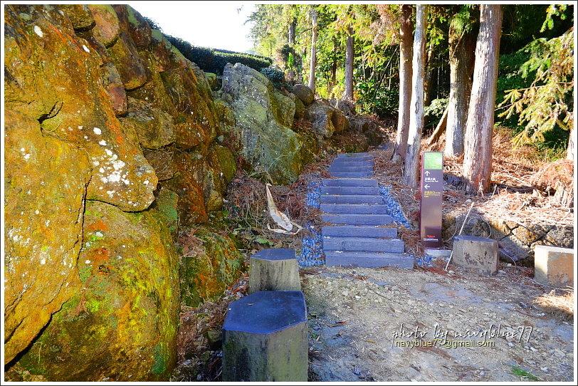 隙頂二延平步道-茶霧之道41.JPG