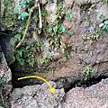 大崗山前後山O形23-減肥洞.JPG