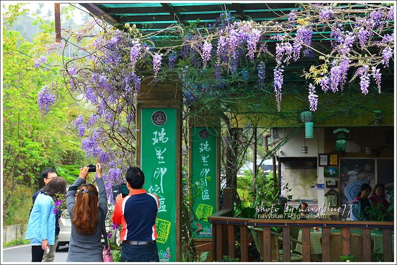 2017瑞里紫藤花季33.JPG