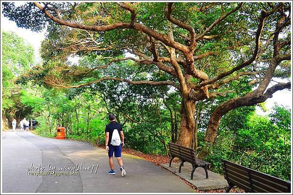 香港太平山頂環迴步行徑18