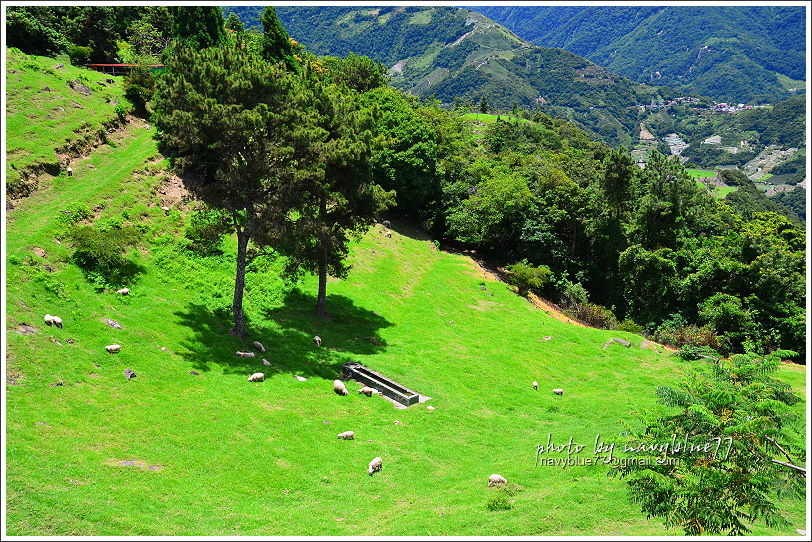 清境高空觀景步道17.JPG