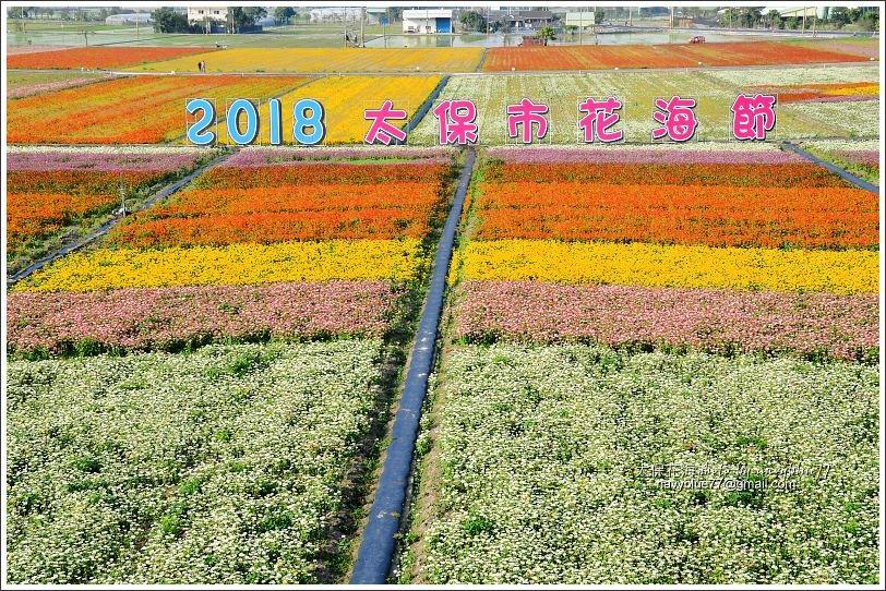 太保花海201801.JPG