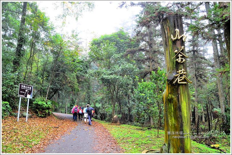 惠蓀林場環場森林步道O形01.JPG