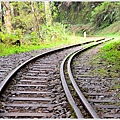 阿里山水山線鐵道-水山神木