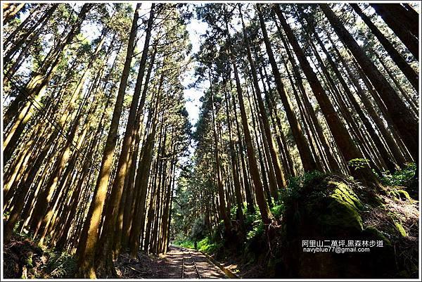 二萬坪黑森林步道