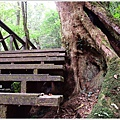 藤枝森林遊樂區