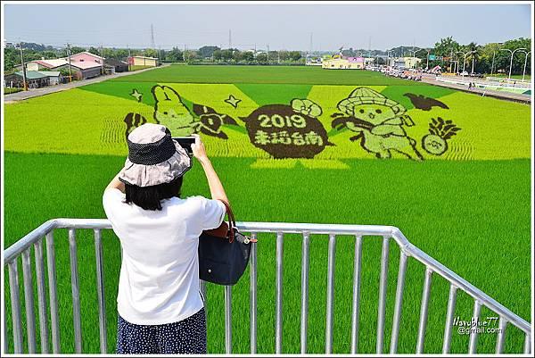 2019林鳳營台南好米季 (2).JPG