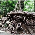 東京高尾山 (13).JPG
