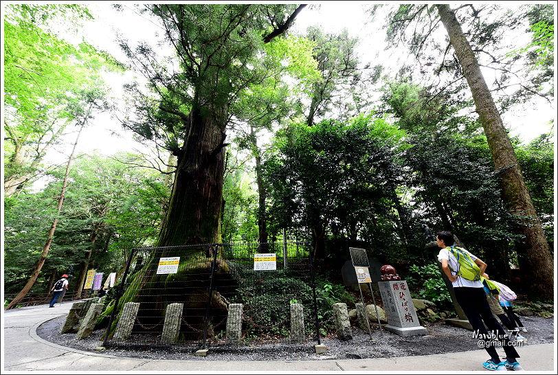 東京高尾山 (19).JPG