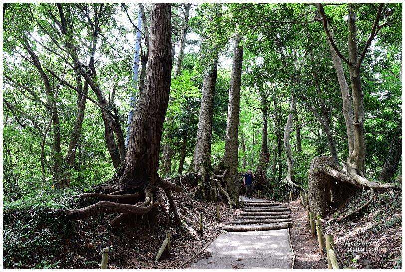 東京高尾山 (31).JPG