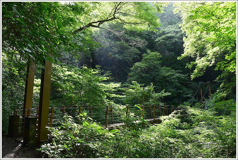 東京高尾山 (48).JPG