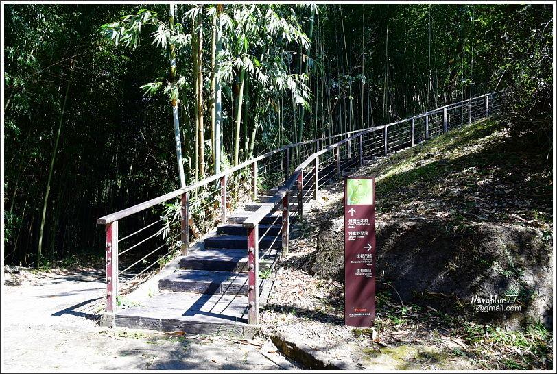 特富野步道 (9).JPG