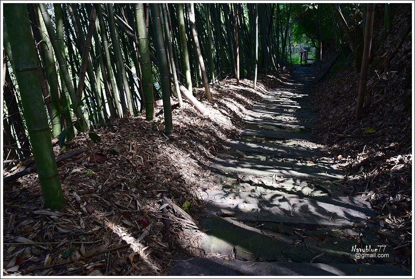 特富野步道 (13).JPG