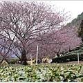 武陵農場櫻花季 (6).JPG