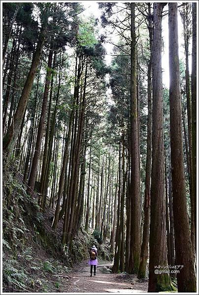 石山引水道 (5).JPG
