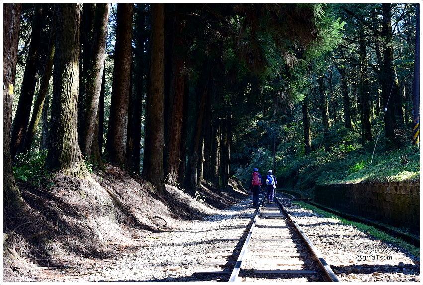 眠月鐵道 (5).JPG