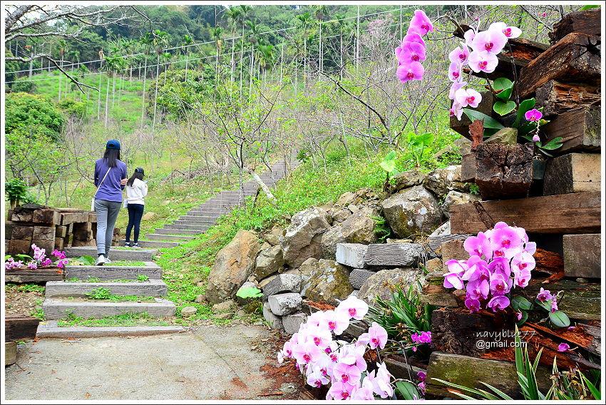 金獅村步道 (8).JPG
