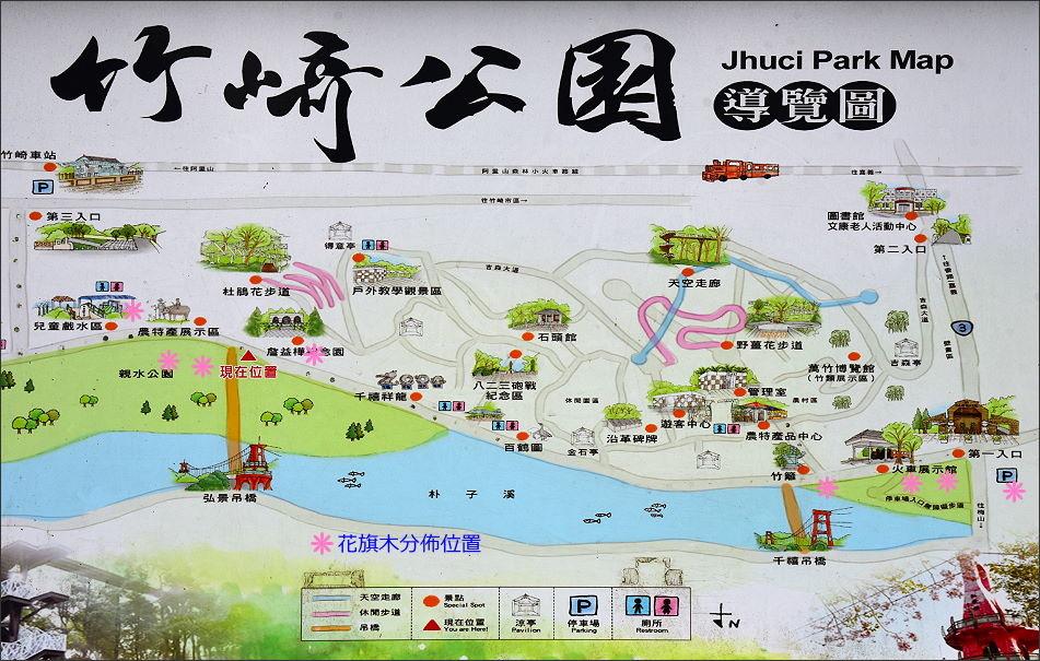 竹崎公園花旗木 (7).JPG