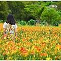 日月潭金針花園 (15).JPG