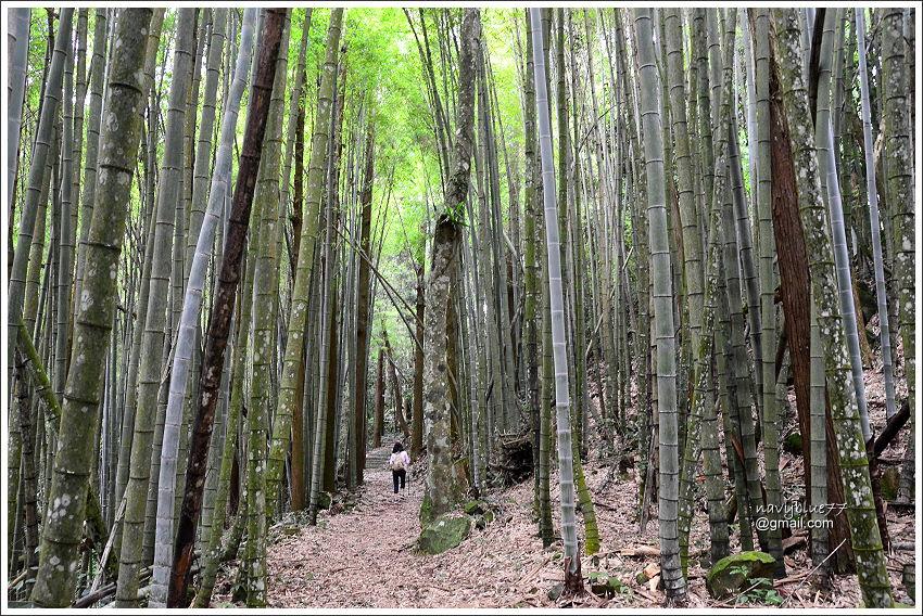 花石溪步道 (13).JPG