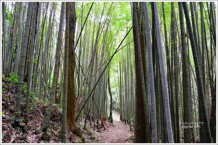 花石溪步道 (14).JPG