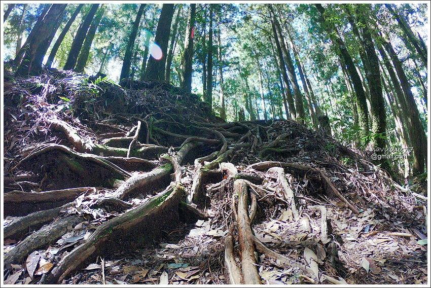杉林溪-水漾森林 (16).jpg