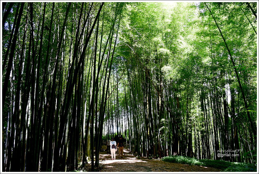 樟樹湖大象山 (7).JPG