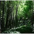 樟樹湖大象山 (9).JPG