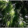 樟樹湖大象山 (10).JPG