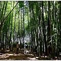 樟樹湖大象山 (8).JPG