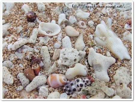 沙灘上的貝殼