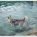 要跳水囉!