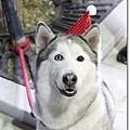 雪雪愛吃!