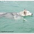 雪兒愛游泳!
