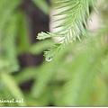 下過雨的葉子~更翠綠!