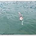 游泳多悠哉!