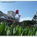 澎湖風景管理處的花草