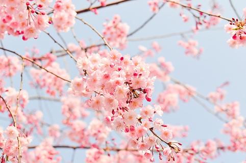 解決春季肌膚問題