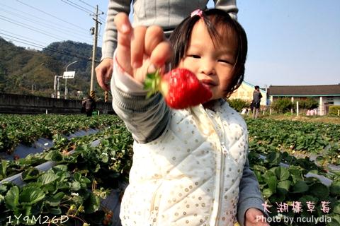0304大湖採草莓14.JPG